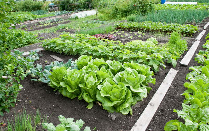 Online Courses  - Certificate in Sustainable Agriculture
